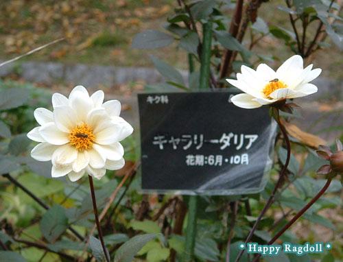 nougyou201011-8.jpg